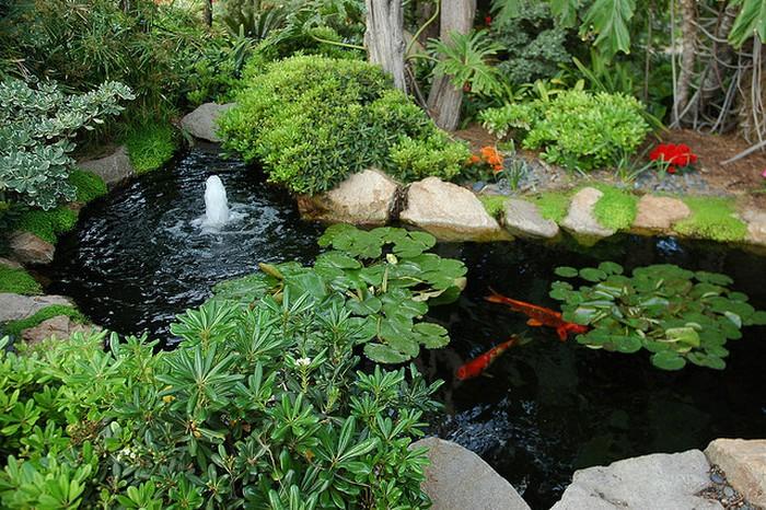 Thiết kế hồ cá koi trong sân vườn
